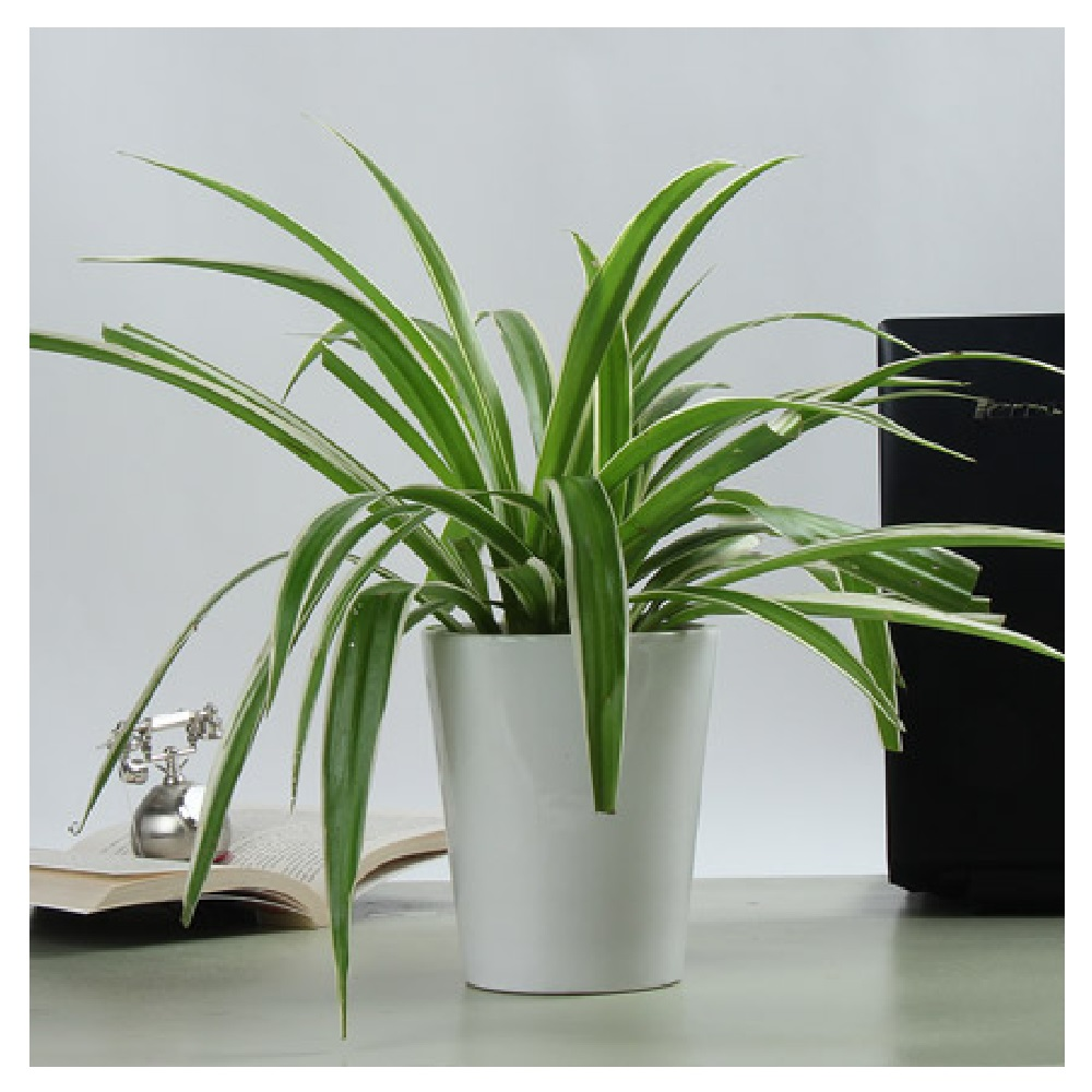 Plants That Deserve A Place In Your Bedroom For A Perfect