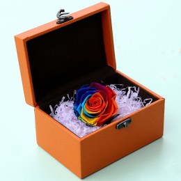 Colorful Rose for Valentines Day