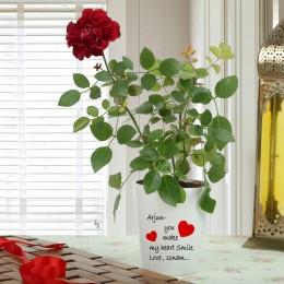 Personalised Red Rose Plant