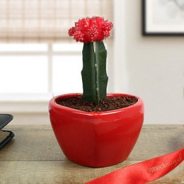 Moon Cactus In Heart Shaped Vase