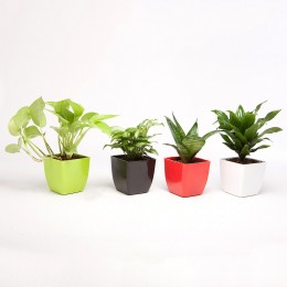 Set of 4 Green Plants in Beautiful Plastic Pots