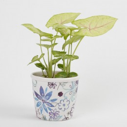 Syngonium Golden Plant in Stoneware Floral Pot