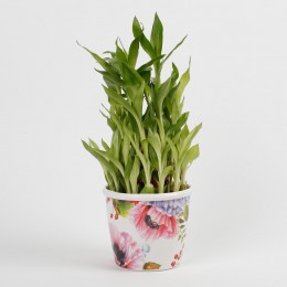 3 Layer Bamboo Plant in Stoneware Floral Pot