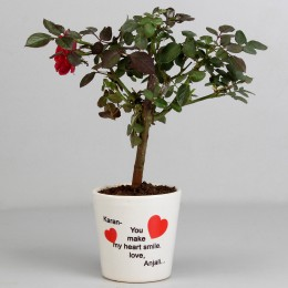 Rose Plant in Personalised Make My Heart Smile Pot