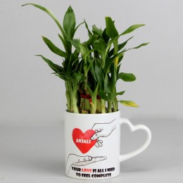 2 Layer Lucky Bamboo Plant in Heart Ceramic Mug