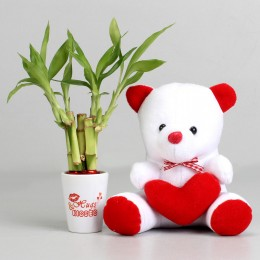 Valentine Special Bamboo Plant & Teddy Bear Combo