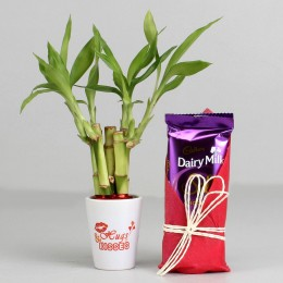 Valentine Special Bamboo Plant & Dairy Milk Silk Combo