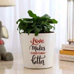 Xanadu Plant In Love Special Ceramic Pot