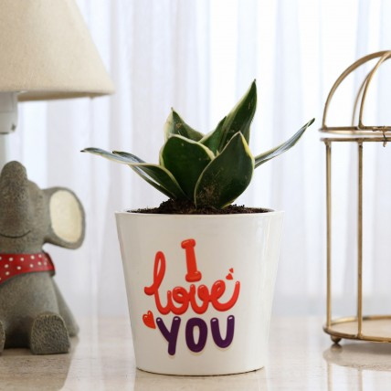MILT Sansevieria In I LOVE YOU Pot
