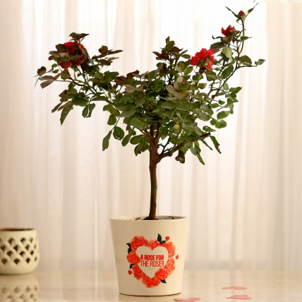 Rose Plant In Heart Print Ceramic Pot