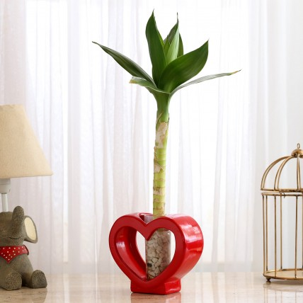 Lotus Bamboo In Red Glass Heart Vase