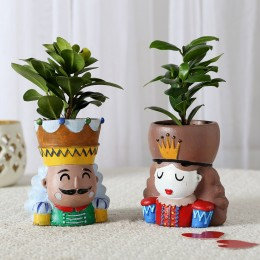 Set of 2 Ficus Compacta In King Queen Pots