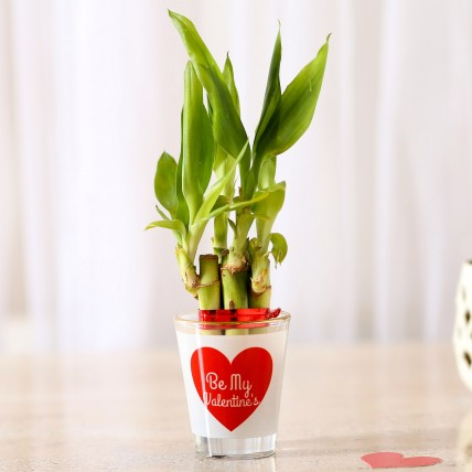 Lucky Bamboo In Be My Valentine Glass Vase