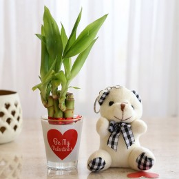 Combo Of Lucky Bamboo & Teddy Bear