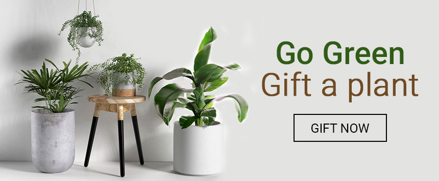 offers on Bookmyflowers