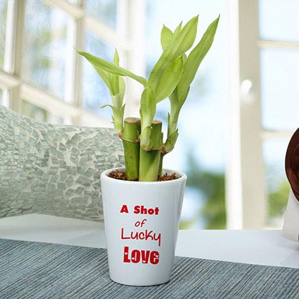 A Shot Of Lucky Love Plant