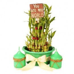 3 layers Lucky Bamboo Pot Hamper