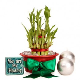 Lucky Bamboo Hamper For You