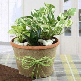 Air Purifying Dish Garden