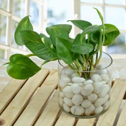 Spendid Money Plant Terrarium