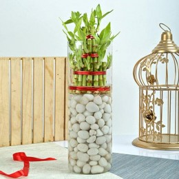 Three Layer Bamboo Decor Terrarium