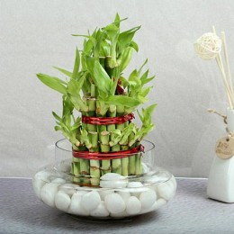 Three Layer Bamboo Good Luck Terrarium