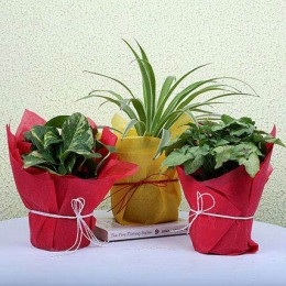 3 Green House Plants