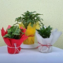 Enjoy Life House Plants