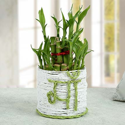 Lucky Bamboo Plant to Mom