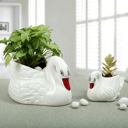 Beautiful Swan Collection