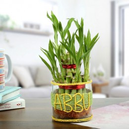 Bamboo Plant For Abbu