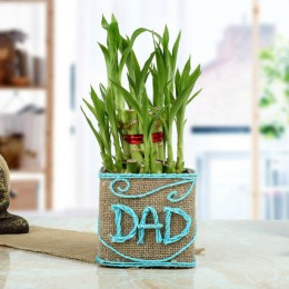 Good Luck Bamboo Plant for Dad