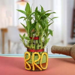 Lucky Bamboo For Brother