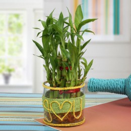 Love For Lucky Bamboo