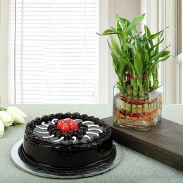 Truffle Cake N Two Layer Bamboo Plant