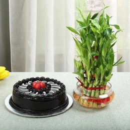 Truffle Cake N Three Layer Bamboo Plant