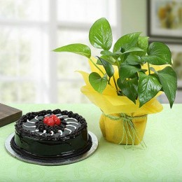 Truffle Cake With Money Plant