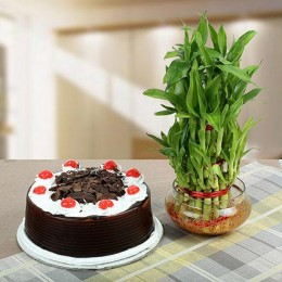 Blackforest Cake With Three Layer Bamboo Plant