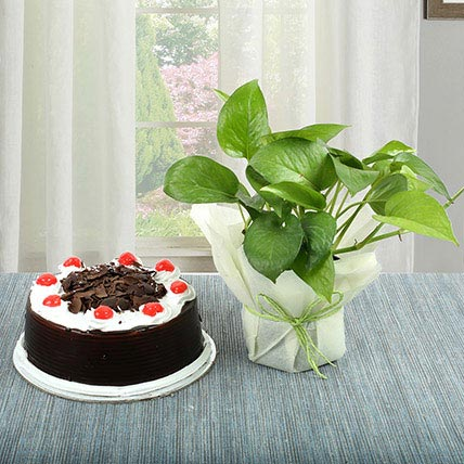 Black Forest Cake With Money Plant