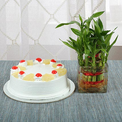 Pineapple Cake With Lucky Bamboo Plant