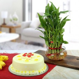 Butterscotch Cake With Three Layer Bamboo Plant
