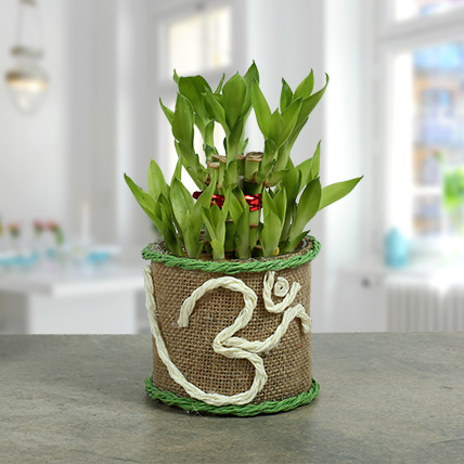 Om Two Layer Bamboo plant