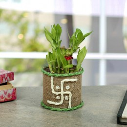 Swastika Two Layer Bamboo plant