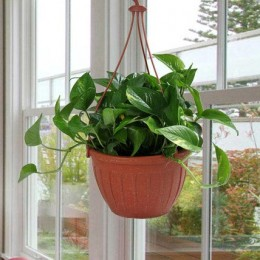 Go Green With Money Plant
