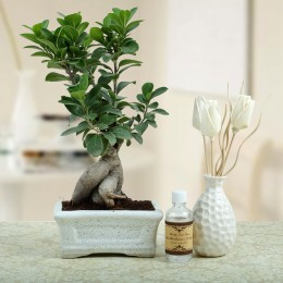 Bonsai N Oil Diffuser