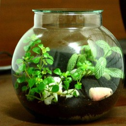 Affection Terrarium