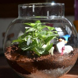 Show Your Art Terrarium