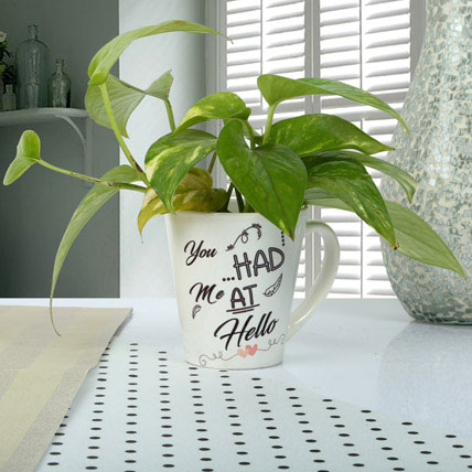 Cup Full Of Money Plant