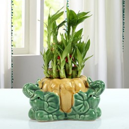 Bamboo Plant With Ceramic Elephant Vase