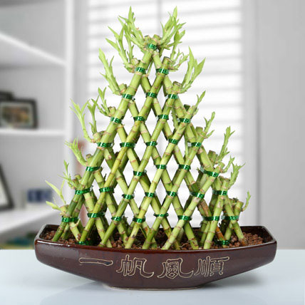 Exotic 8 Layer Lucky Pyramid Bamboo Plant